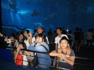 美ら海水族館①.JPG